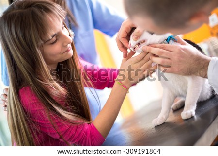 Girl helps with examination of  mouth and teeth of her cat in vet clinic - stock photo