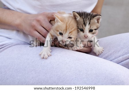 Girl holding adorable kittens - stock photo
