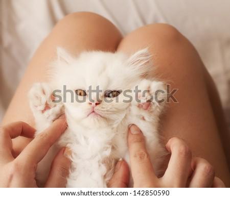 Girl holding adorable white Persian kitten - stock photo
