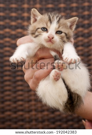 Girl holding an adorable little kitten