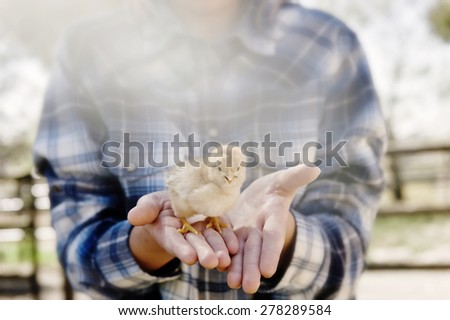 girl holding baby chick in her hands, with light flare - stock photo