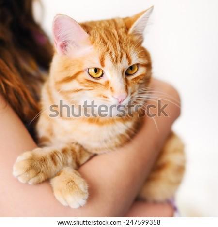 Girl holding beautiful orange tomcat - stock photo