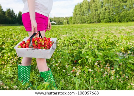 Girl holding full basket of strawberries. Focus on basket and horizontal format - stock photo