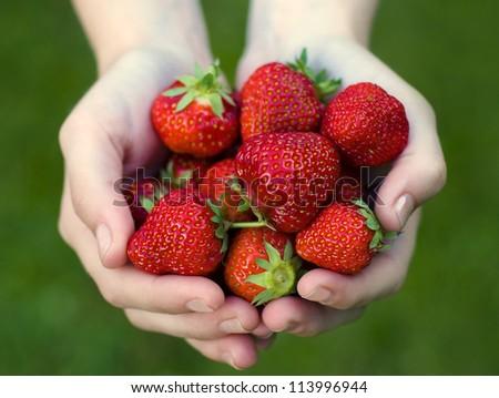 Girl holding strawberries (Fragaria x ananassa ) in her hands - stock photo