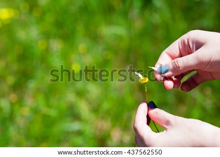 Girl holds daisy in hand, he plucks the petals of daisies on a green background