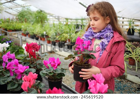 Girl in a pink jacket holding flower pot with cyclamen in the greenhouse - stock photo