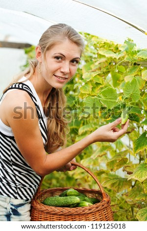 girl is picking cucumber in the greenhouse - stock photo