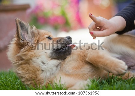 girl is warning wis her finger a cute Elo puppy