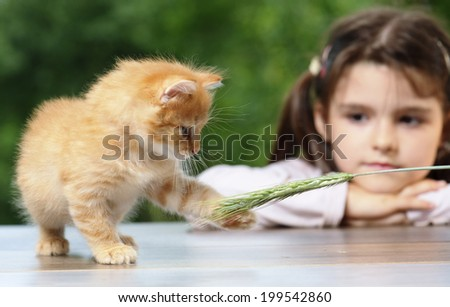 Girl looking at a fluffy kitten - stock photo