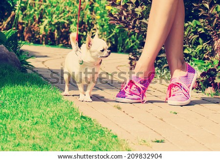 girl on the walk with chihuahua in the park on a sunny summer day - stock photo