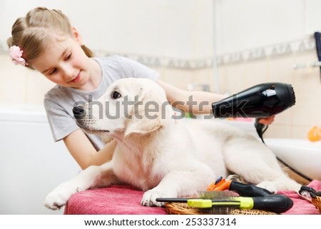 Girl owner is grooming the fur of retriever puppy after shower - stock photo
