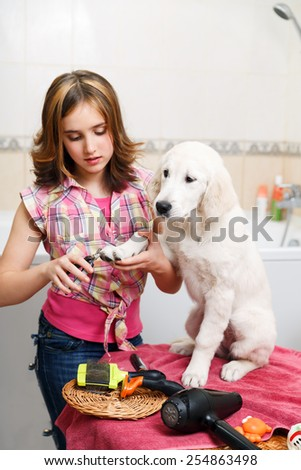 Girl owner is making manicure of retriever puppy after shower - stock photo