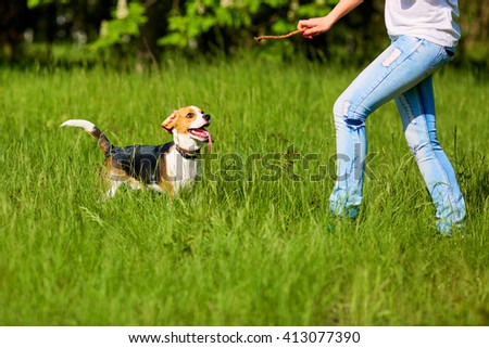 Girl playing with a dog in the park. In the hands of the stick. - stock photo