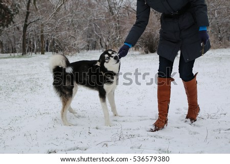 Girl playing with a dog in winter Husky