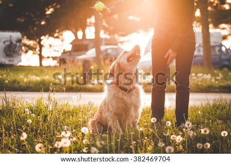 Girl playing with her golden retriever dog in summer park, Soft focus with sun flare effect. - stock photo