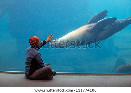 girl playing with sealion - stock photo
