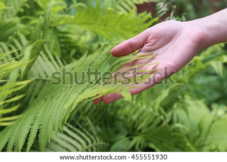 Girl's hand touching fern leaf. Macro - stock photo