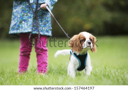 Girl Taking King Charles Puppy For Walk On Lead