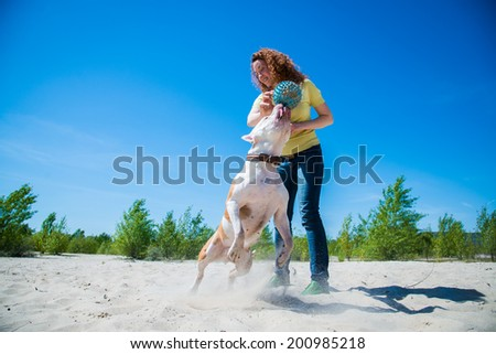Girl walking a dog breed Staffordshire Terrier - stock photo