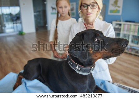 Girl with doberman at a vet