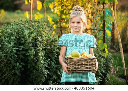 Girl 6 years old holding a basket of apples. Autumn sunset light, harvesting at the farm, in the garden. Blonde girl smiling.