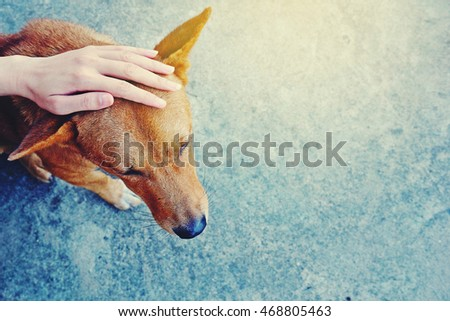 Homeless Animals Stock Images, Royalty-Free Images & Vectors | Shutterstock