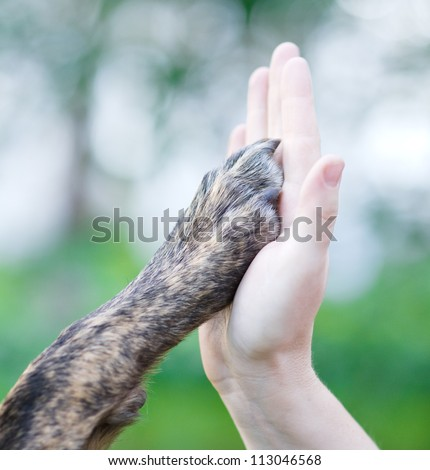 Give me five - Dog pressing his paw against a woman hand - stock photo