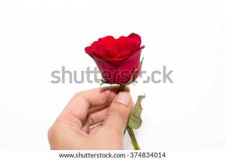 Giving a red rose isolate on white background