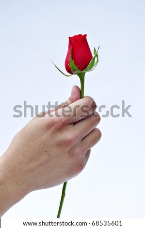 Giving a rose. Red rose in hand isolated on white background - stock photo