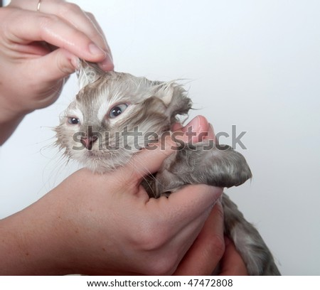 Giving cute kitten a bath in water