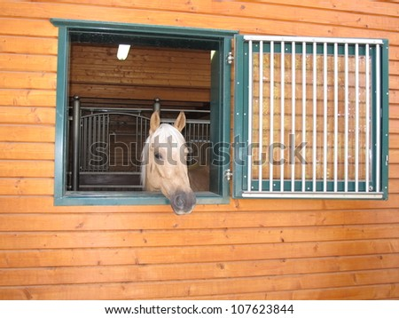 GIVRINS, SWITZERLAND - JULY 14: A horse looking through the window during a celebrity horse reigning event on July 14, 2012 in Givrins, Switzerland