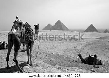 GIZA, EGYPT - MAY 31 :Camels look at three Pyramids on May 31, 2011, Giza, Egypt. The world's oldest tourist attraction, the Pyramids of Giza are 5000 years old.