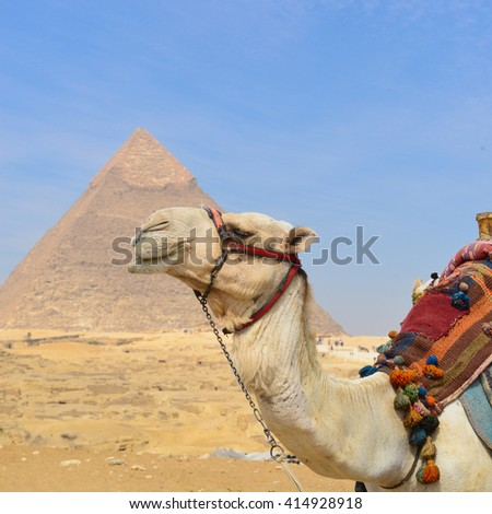 Giza Pyramids and camel in Cairo, Egypt - stock photo