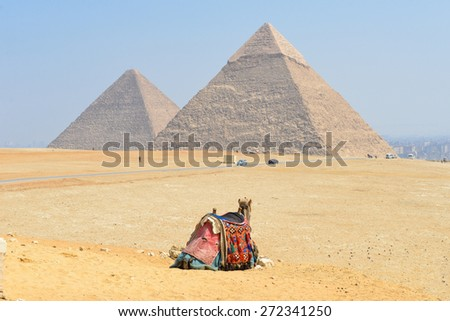 Giza Pyramids in Cairo, Egypt - A tour camel looks at Pyramids - stock photo