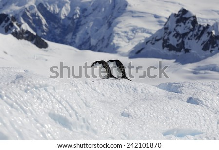 Glaciers and icebergs of the coast of Antarctica. Penguins on a bright sun. - stock photo