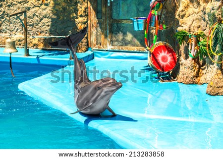 Glad beautiful dolphin in a clear sunny day playing on the edge of a swimming pool on the representation - stock photo