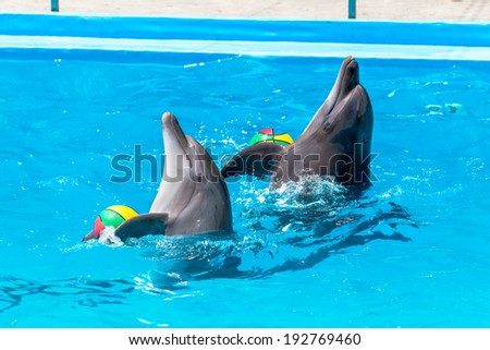 Glad beautiful dolphin in blue water in the swimming pool on a bright sunny day sailing on the foam boards on the representation
