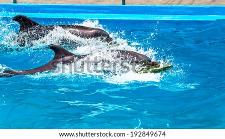 Glad beautiful dolphin in blue water in the swimming pool on a bright sunny day sailing on the foam boards on the representation - stock photo