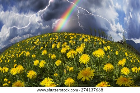 Glade Spring and summer flowers-dandelions under a clear sky with bright clean clouds pleases viewer saturated colors  of a new day. After the storm and rain especially bright foliage color - stock photo