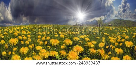 Glade Spring  summer flowers-dandelions under a clear sky with bright clean clouds pleases viewer saturated colors and the freshness of a new day. After  storm and rain especially bright foliage color