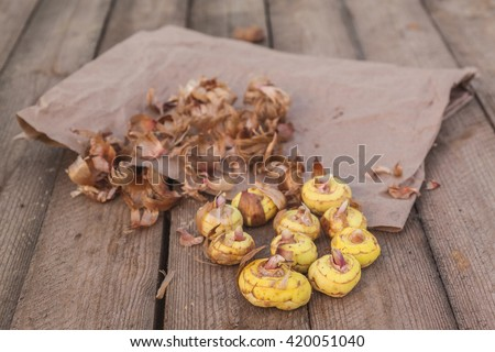 Gladiolus bulbs before planting  on a wooden table - stock photo