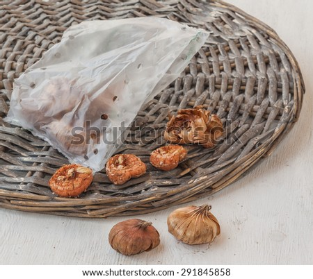 Gladiolus bulbs in  r bag  on a wooden background - stock photo
