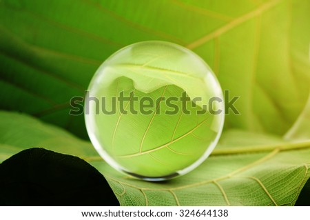 Glass ball on green leaf  - stock photo