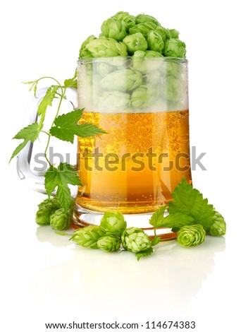 glass beer with rich and aromatic hop isolated on white background