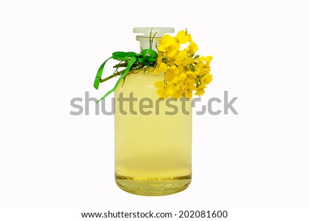 glass bottle of rape seed oil with rape flowers and ribbon - stock photo