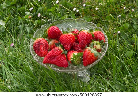 Glass bowl, fruit bowl or cup containing fresh and natural strawberries on green grass background outdoors