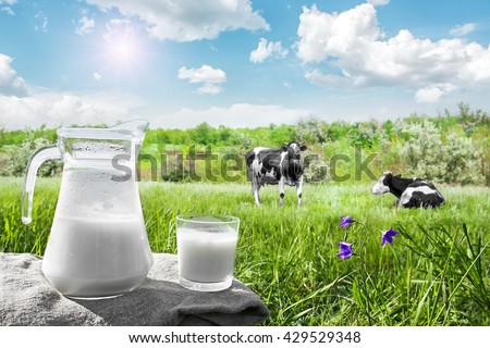 Glass jug with milk and a glass on the grass against a backdrop of picturesque green meadows with flowers at clear sunny summer day. Fresh organic milk. Beautiful blue sky. A herd of cows in field. - stock photo