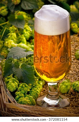 glass of beer with hop cones and barley - stock photo