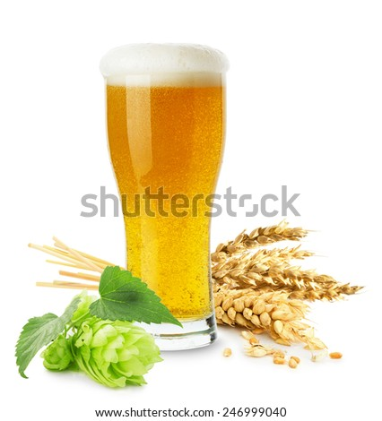 glass of beer with wheat and hops isolated on the white background - stock photo