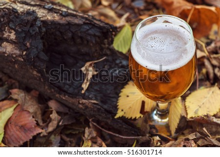 Glass of light beer on a forest floor leaves on an autumn day
